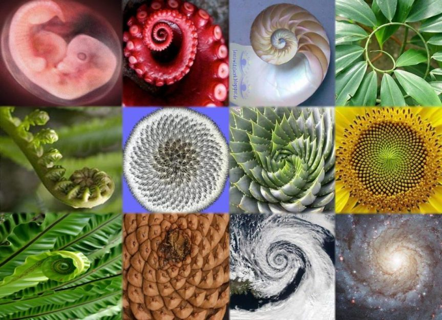 Nature's Proof of Intelligent Design: Sacred Geometry, Phi, the Fibonacci Spiral, & Self-Reflective Designs [Mega-Post]